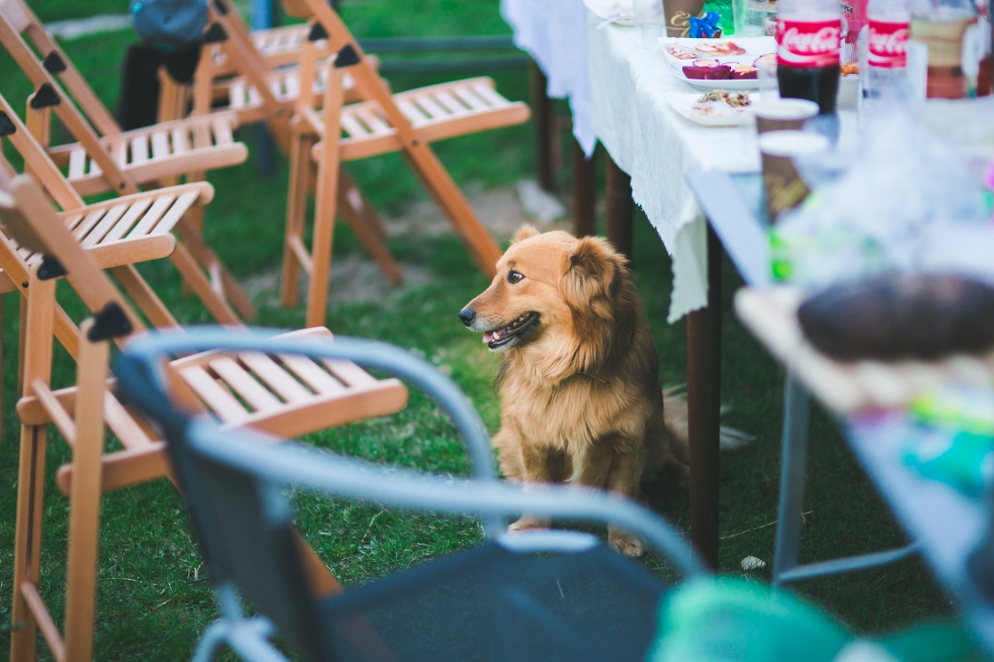 garden-party-animal-dog